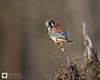 birds-DSC_1605