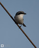 birds-DSC_1660