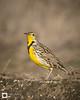 birds-DSC_1575
