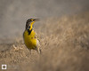 birds-DSC_1590