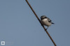birds-DSC_1656