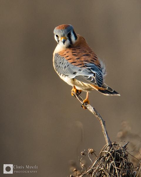 birds-DSC_1606