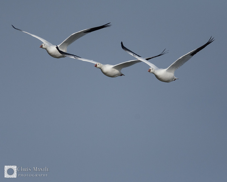 birds-DSC_1722