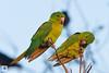 birds-DSC_1134