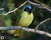 birds-DSC_0981