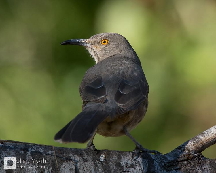 birds-DSC_0956