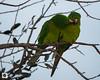 birds-DSC_1150