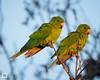 birds-DSC_1126