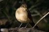 birds-DSC_1011