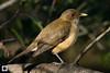 birds-DSC_1021