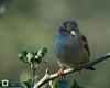 birds-DSC_0888