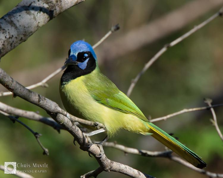 birds-DSC_0974