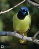 birds-DSC_0977