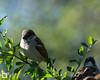 birds-DSC_0894