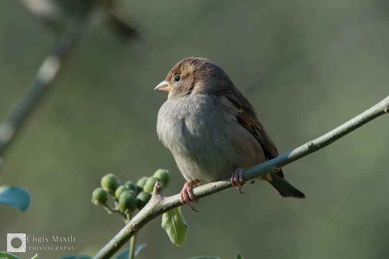 birds-DSC_0903