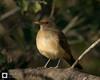 birds-DSC_1006