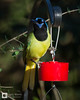 birds-DSC_0987