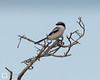 birds-DSC_0663