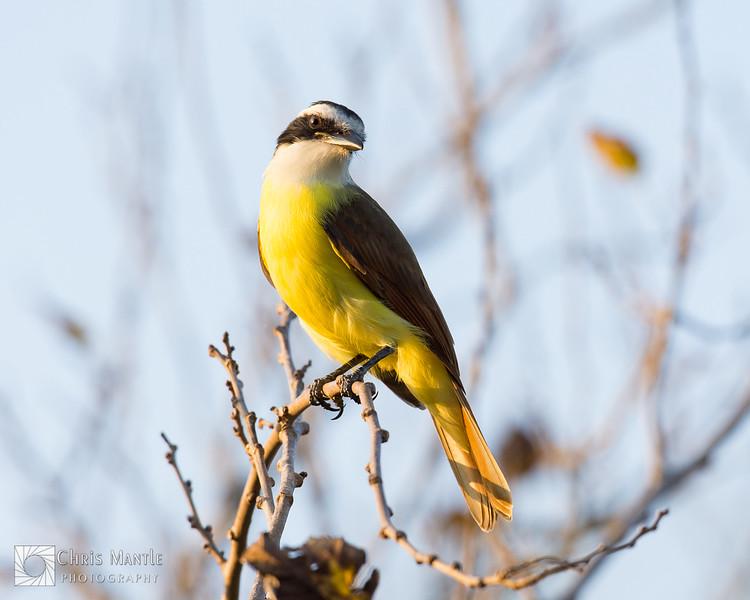 birds-DSC_0691