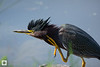birds-DSC_0548