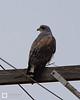 birds-DSC_0250