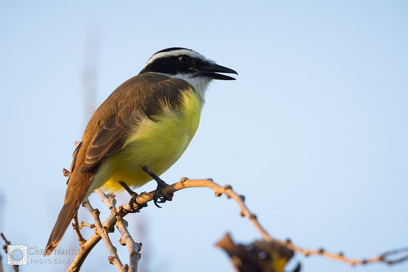 birds-DSC_0705