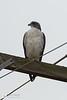 birds-DSC_0272
