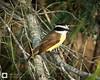 birds-DSC_0588