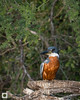 birds-DSC_0635