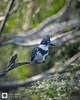 birds-DSC_0501