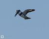 birds-DSC_0499