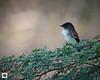 birds-DSC_0457