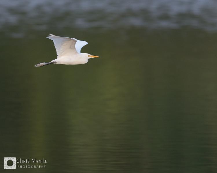 birds-DSC_0821