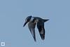 birds-DSC_0500