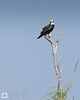 birds-DSC_0441