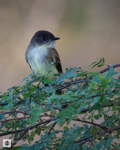 birds-DSC_0455