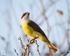 birds-DSC_0682
