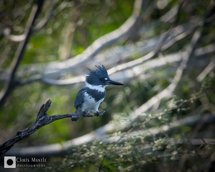 birds-DSC_0508
