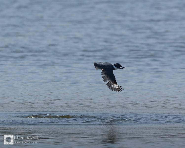 birds-DSC_0467