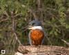 birds-DSC_0633