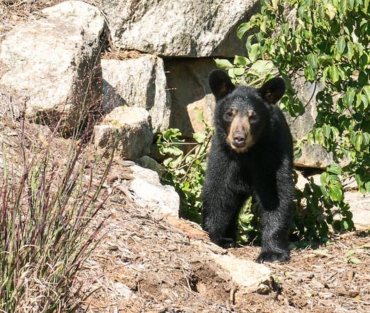 2018-9-3 AVL bears