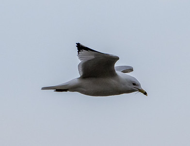Lock and Dam 14 Birds