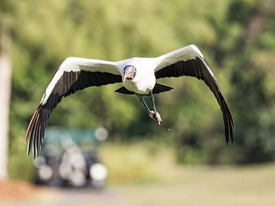 Golf Course Wildlife