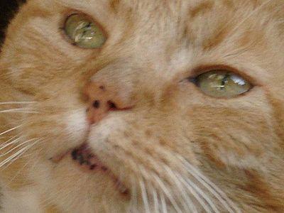 20lbs of Feline Wonder - Part II