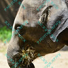 St. Louis Zoo closeup - 6/28/14
