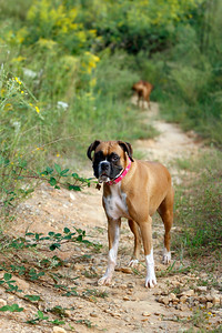 9-24-2010, Photo by CandaceWest.com  JOONE, Boxer