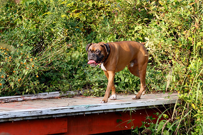9-24-2010, Photo by CandaceWest.com  BOONE AND JOONE, Boxers.