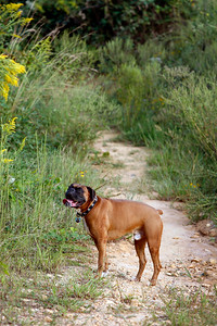 9-24-2010, Photo by CandaceWest.com  BOONE, Boxers.