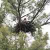 April 2: Testing the nest