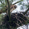 April 2: Adding the finishing touches to the nest